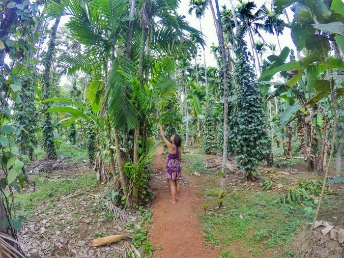 Free spice plantation tour at Dudhsagar Plantation Goa