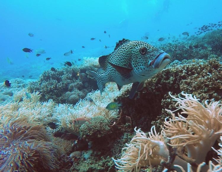 Raja Ampat's marine life - Raja Ampat Travel Guide